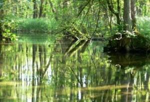 Uferwaelder_5